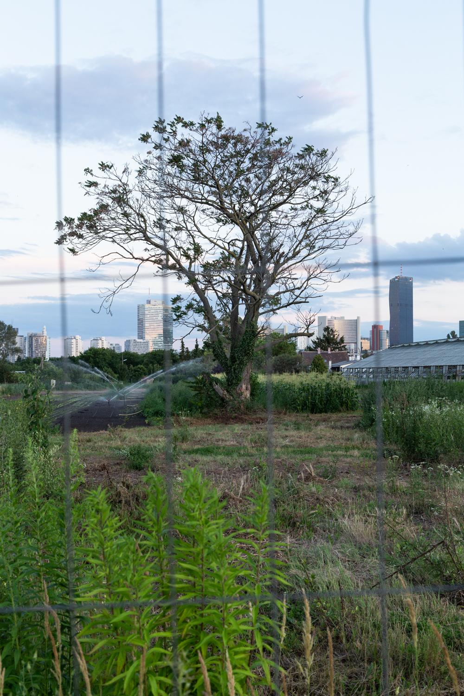 Reportagefotografie, Bäume in der Stadt
