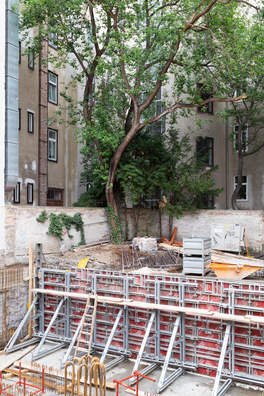 Baum, urban